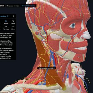 TCIO Anatomia VR